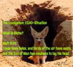Niches: foxes have holes