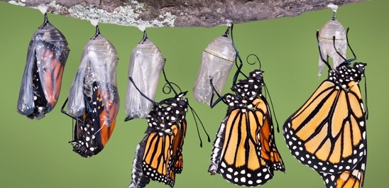 The Incredible Story of A Monarch Butterfly 🦋
