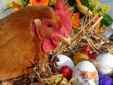 Easter Rooster 🐔 Abraham